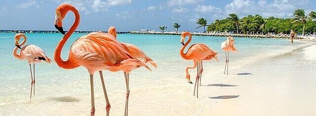Fenicotteri a Playa Pilar